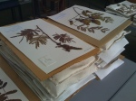 Herbarium - finished mounts