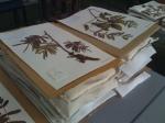 Herbarium - finished mounts