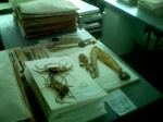 Herbarium - mounting room