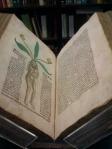 Hortus Sanitatis 1491